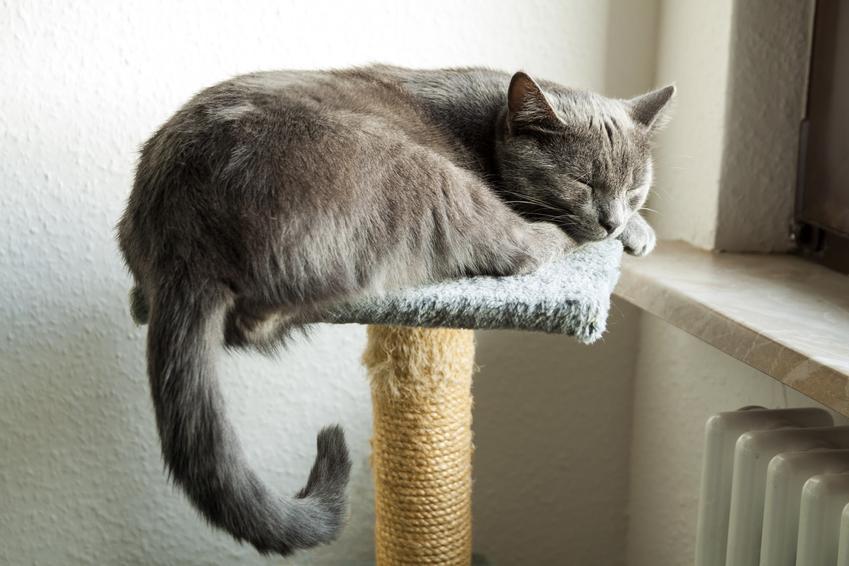 Kot śpiący na drapaku, a także wskazkówki, z czego i jak samodzielnie zrobić drapak dla kota