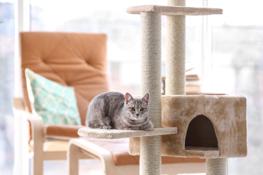 Kot siedzący na drapaku, a także porady z czego zrobić drapak dla kota krok po kroku