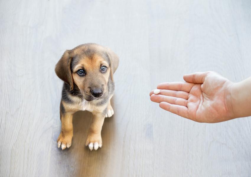 Pies siedzący na podłodze i tabletka na dłoni, a także polecane tabletki na kleszcze dla psa