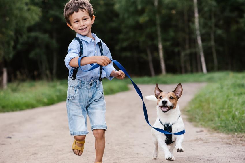 Pies z chłopcem na spacerze oraz jak założyć szelki dla psa szczenięciu i nie tylko