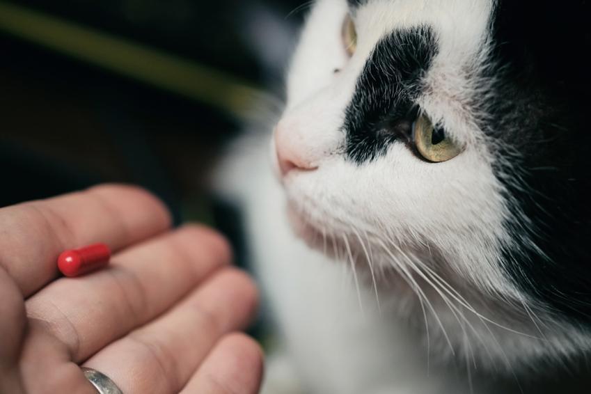 Kot przed podaniem leku oraz tabletki antykoncepcyjne dla kota i niezbędne porady