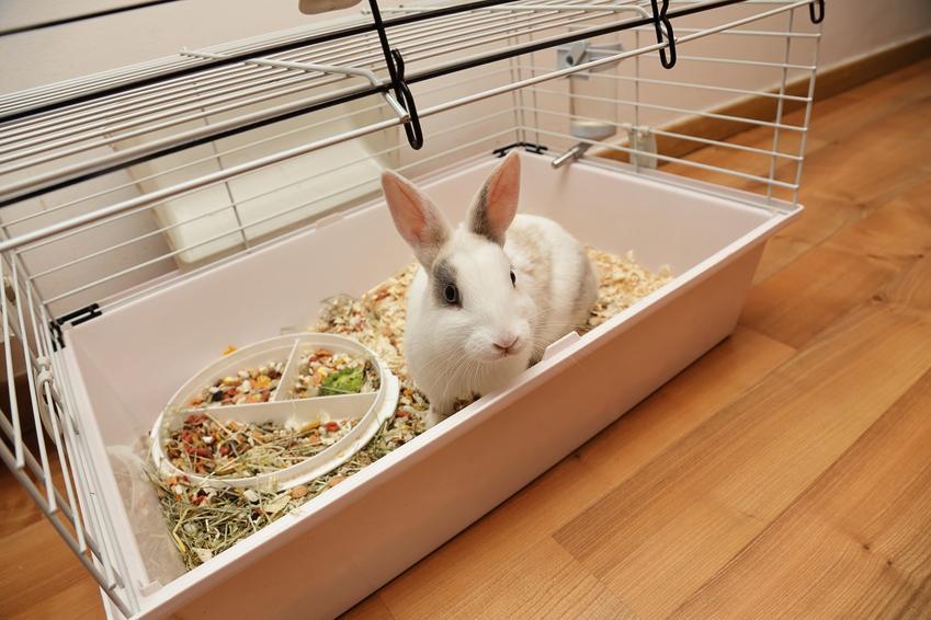 Królik siedzący w klatce w domu, a także jak wybrać lub jak zrobić domek dla królika do klatki