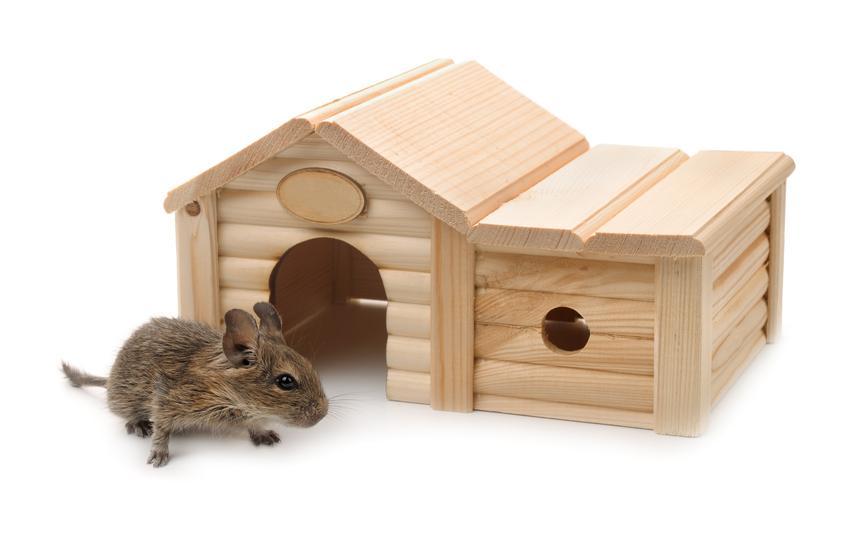 Chomik i domek z drewna na białym tle, a także jaki domek dla chomika wybrać