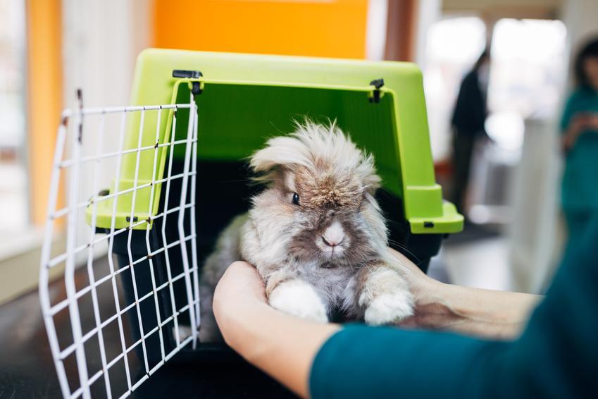 Królik w klatce, a także nosówka a także inne popularne choroby królików, ich objawy i leczenie