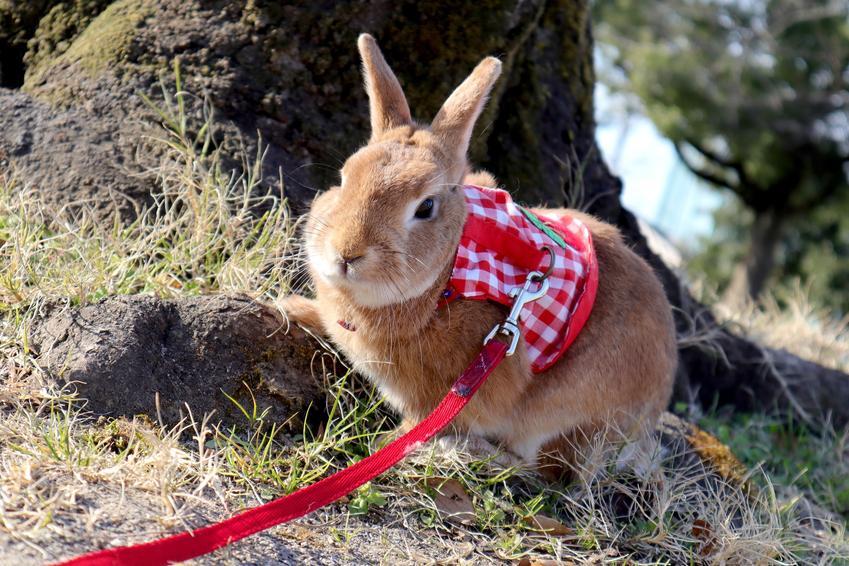 Najlepsze szelki dla królika, czyli porady, jaki puszorek dla królika wybrać