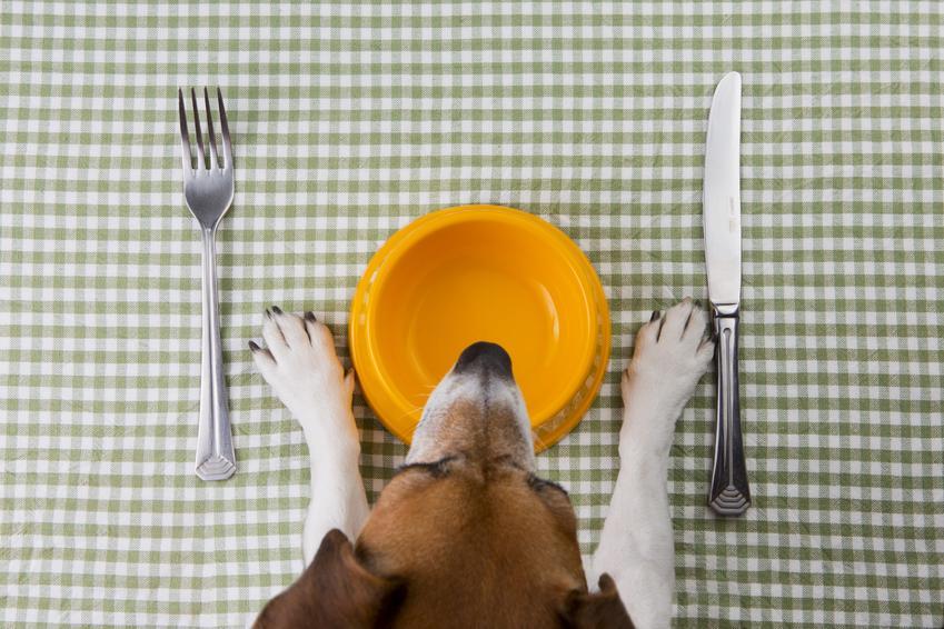 Pies przy pustej misce oraz dieta odchudzająca dla psa i odchudzanie psa krok po kroku