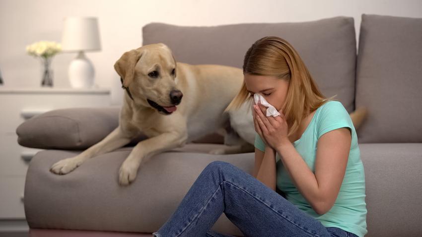 Pies przy kichającej kobiecie oraz psy dla alergików i pies dla alergika