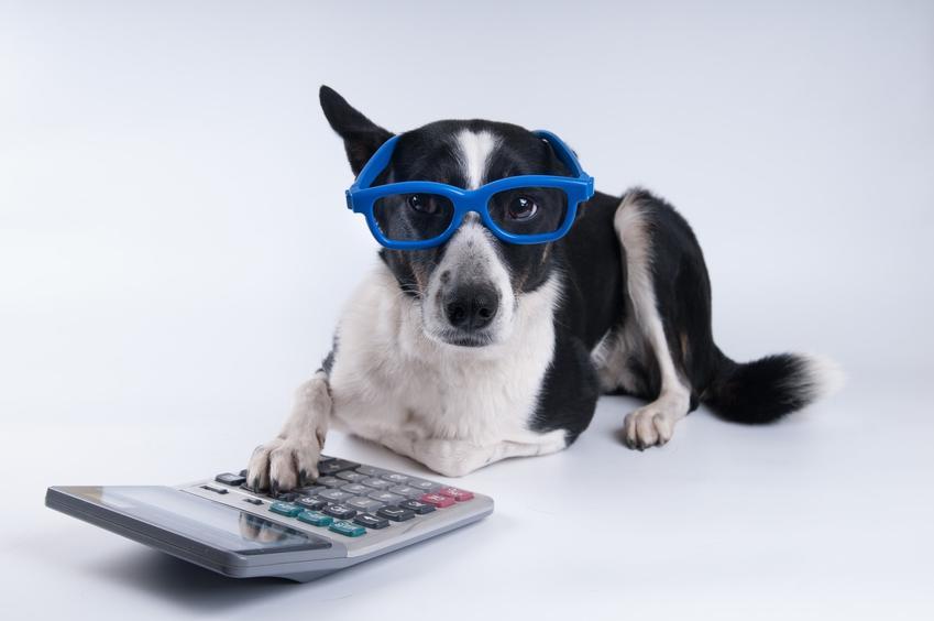 Pies w niebieskich okularach z kalkulatorem, czyli podatek od psa i ile wynosi podatek od psa