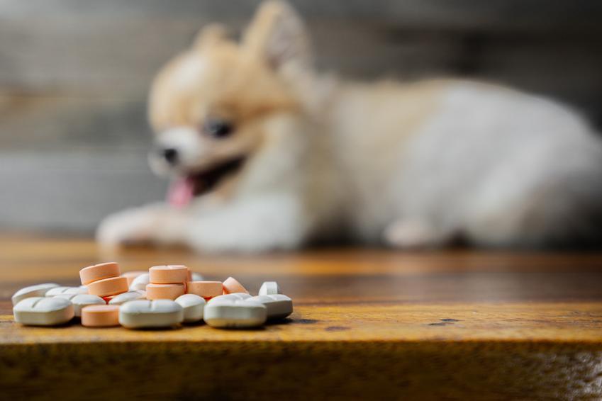 Rabletki na odrobaczenie psa przed siedzącym psem oraz leki na odrobaczenie psa