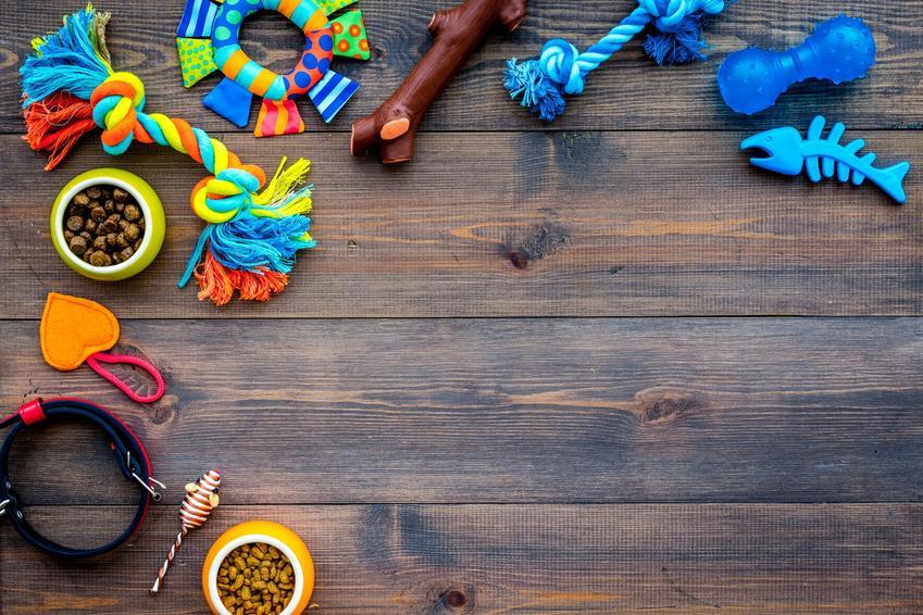 Zabawki, akcesoria i inne rzeczy dla psa na tle drewnianych desek, czyli co kupić psu