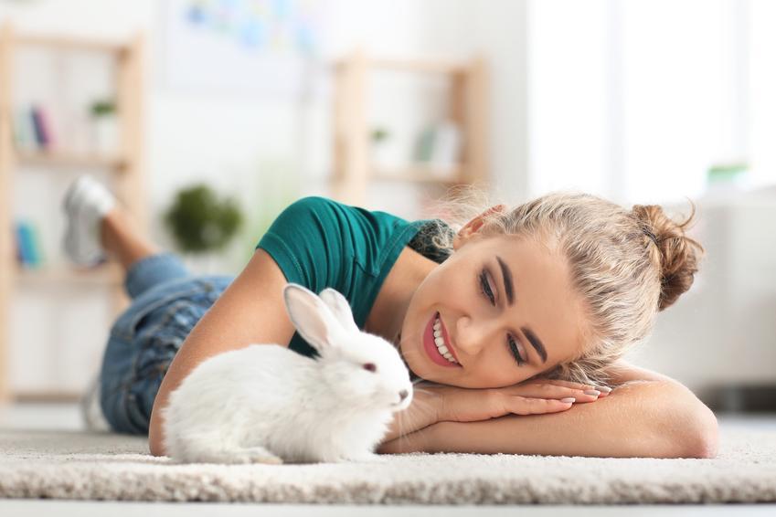 Królik domowy na dywanie z właścicielką, a taże wychowanie, żywienie i hodowla