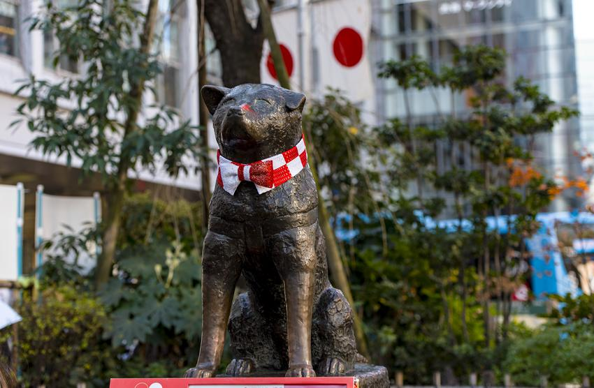 Niesamowita historia psa Hachiko
