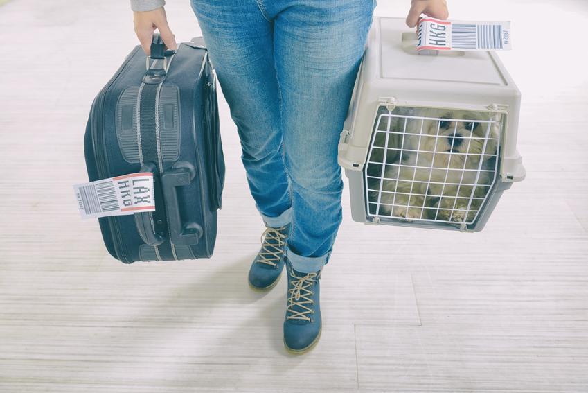 Pies w transporterze na terenie lotniska, a także jak wygląda lot samolotem z psem