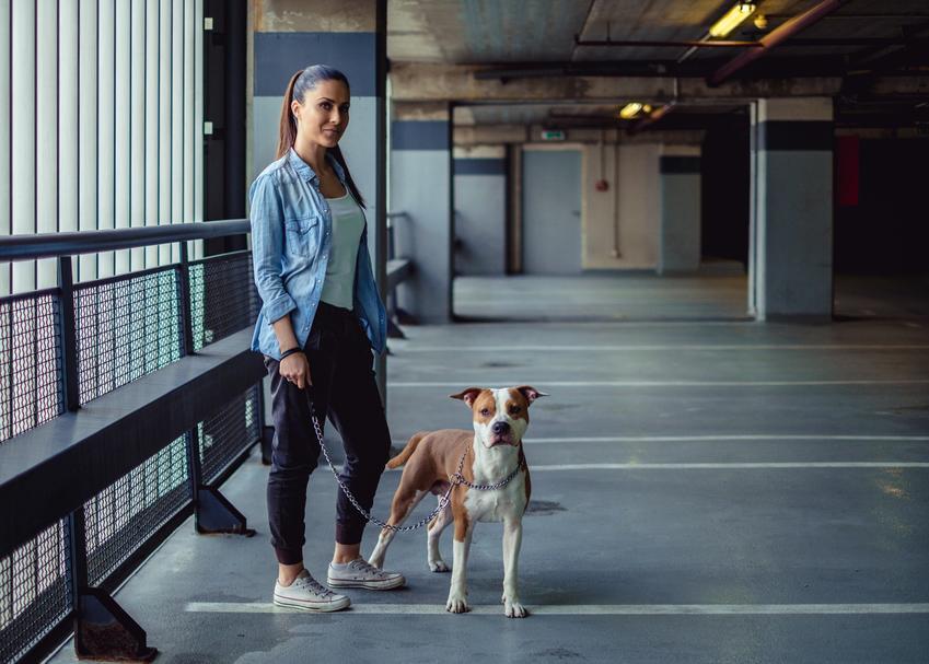 Kobieta z amstaffem podczas spaceru, a także prawidłowa waga amstaffa i tabela wagi psa