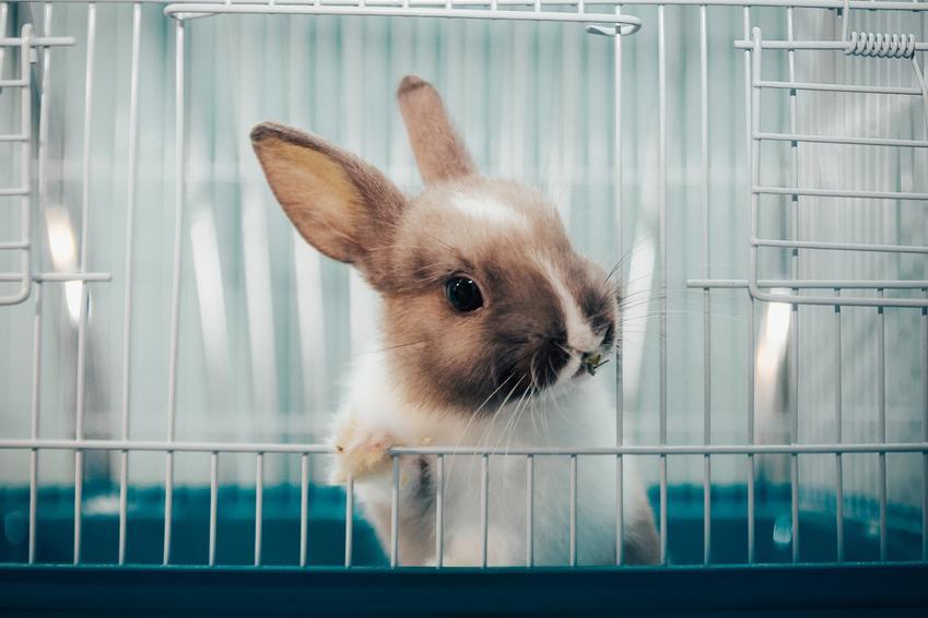 Królik domowy siedzący w klatce, a także fajne imiona dla królika