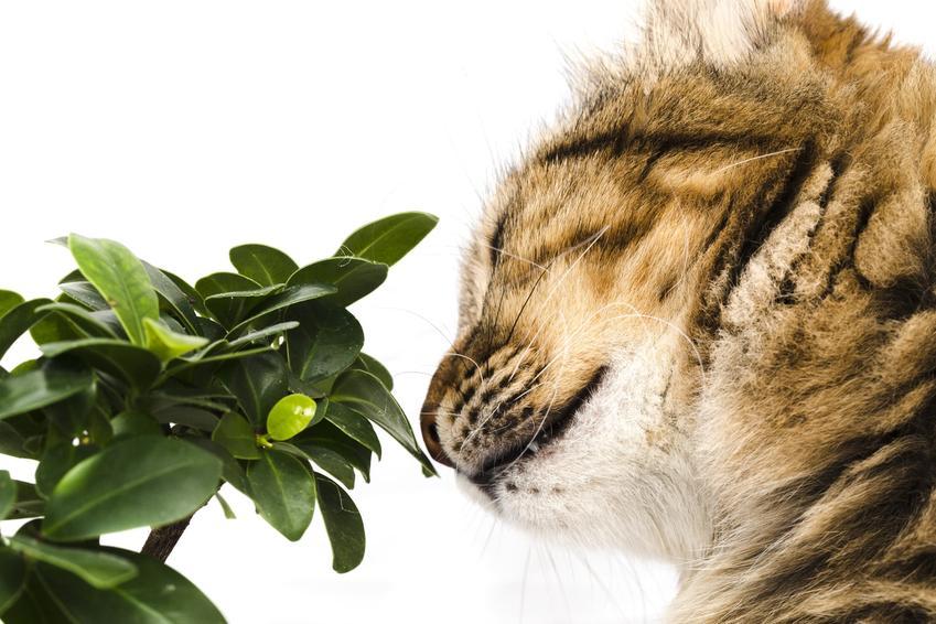 Kot wąchający roślinę oraz porady, jakiego zapachu nie lubią koty i jak odstraszyć koty