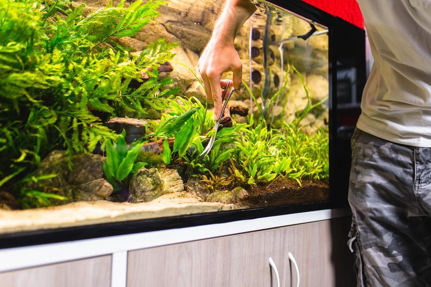 Mężczyzna użądzający akwarium, a także porady, jak założyć akwarium z krewetkami