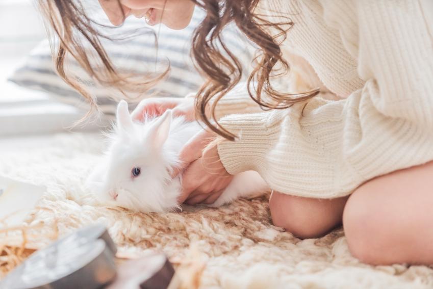 Dziewczyna z królikiem domowym, a także metalowa kuweta dla królika i inne rodzaje