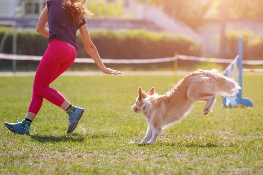 Pies z właścicielem podczas tresury, a także przeszkody dla psa i agility