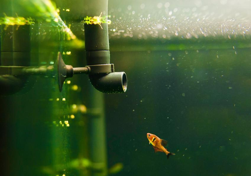 Mała rybka w akwarium, a także polecany filtr do akwarium z pompką i jego cena