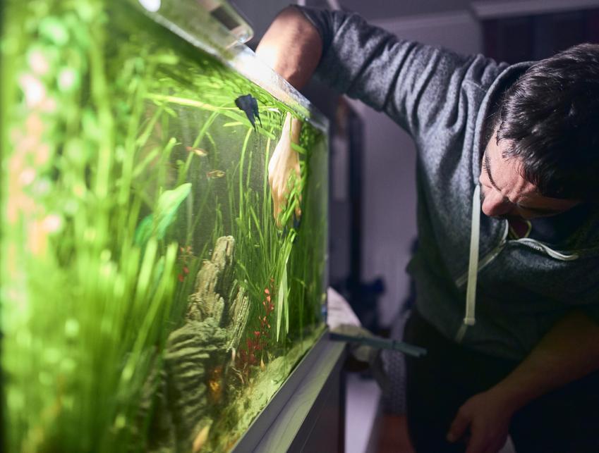 Mężczyzna przy akwarium, a także okrzemki w akwarium i ich zwalczanie