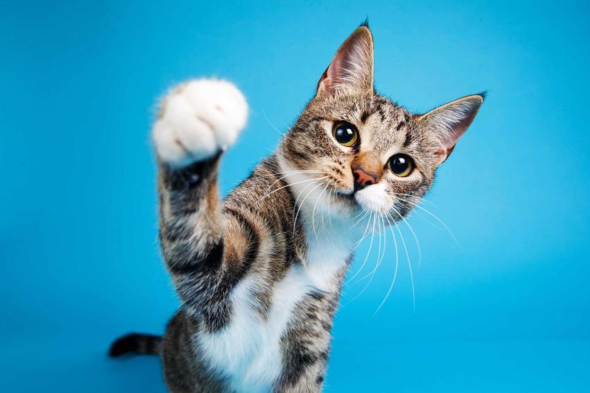Zadbany kot -  prawdziwy przyjaciel człowieka