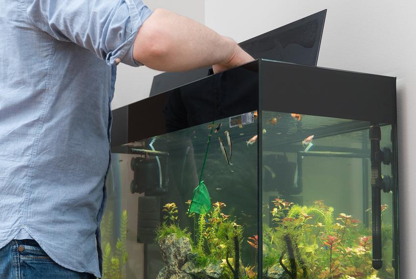 Mężczyzna podczas czyszczenia akwarium, a także sposoby na glony w akwarium