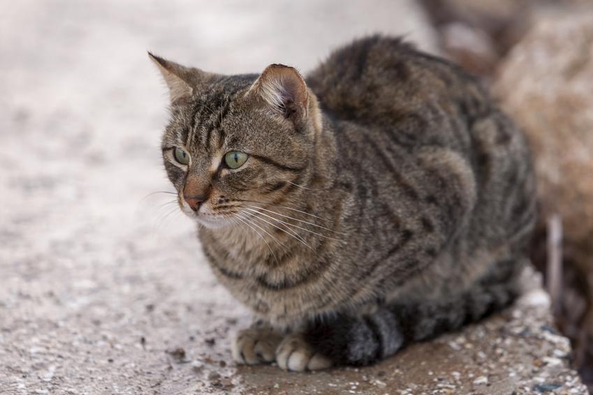 Kot siedzący na podłodze, a także koty dla alergików, czyli hipoalergiczne rasy kotów