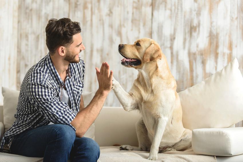 Duży pies podający łapę swojemu właścicielowi, a także oryginalne imiona dla psów, psa