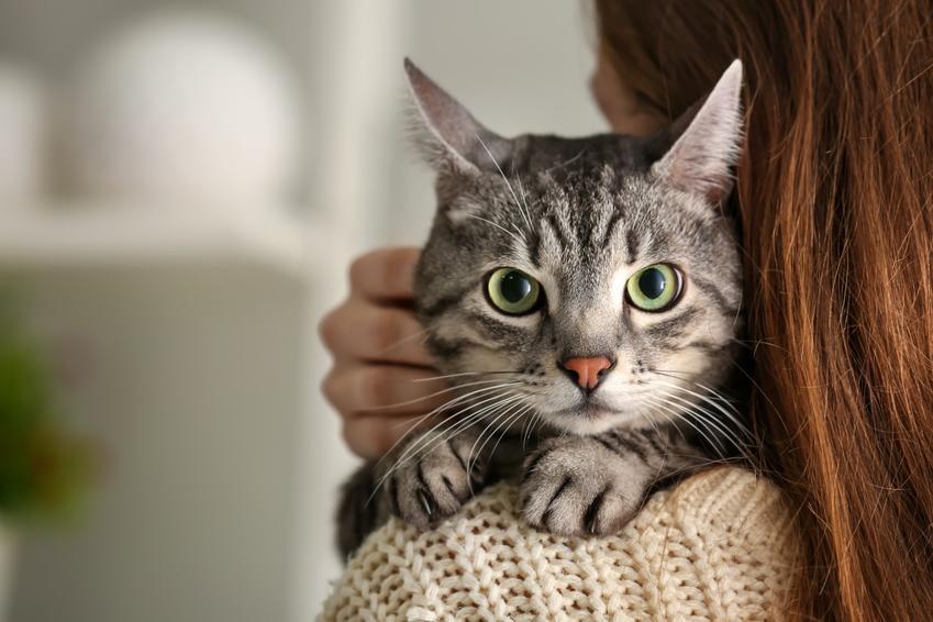 Kot wtulony w swoją panią, a także inspirujące pomysły, jak nazwać kota