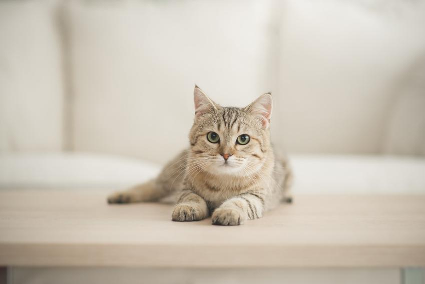 Kot siedzący na podłodze, a także porady, jak nazwać kota, czyli fajne imię dla kota