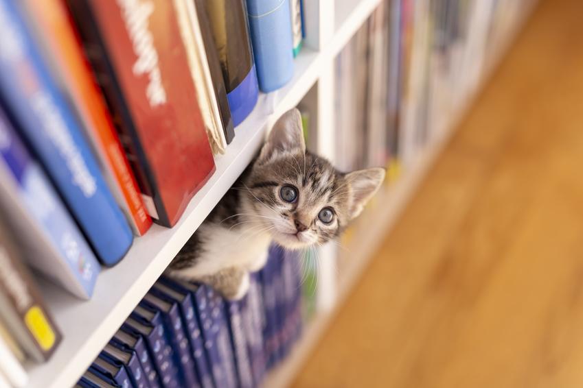 Mały kotek chowający się na półce z książkami oraz pierwsze dni kota w nowym domu