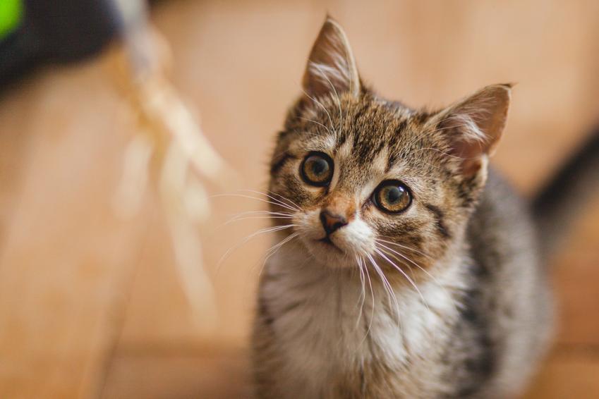 Mały kot bawiący się włóczką, a także pierwsze dni kota w nowym domu