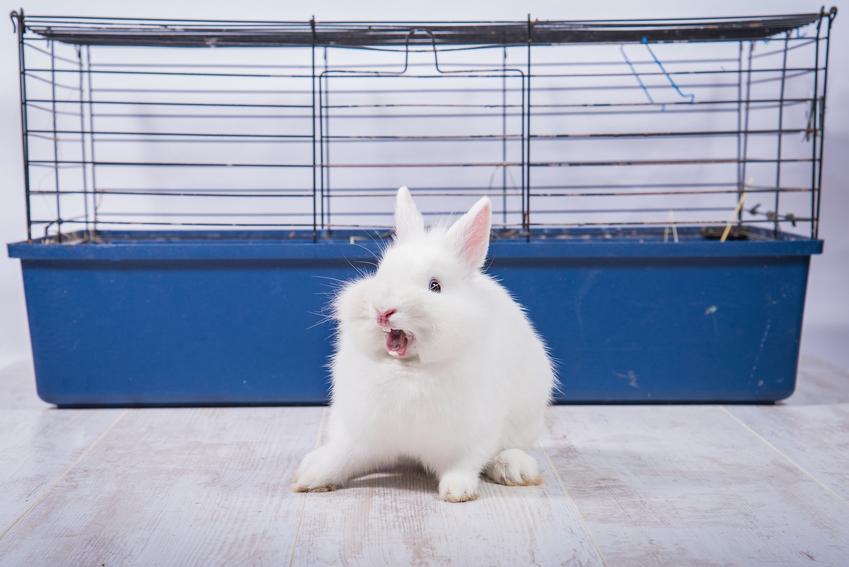 Biały królik siedzący przed klatką, a także wskazówki, jak zrobić wybieg dla królika