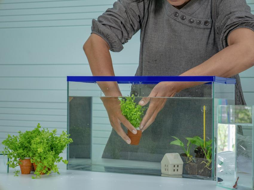 Zakładanie akwarium przez mężczyznę, a także akwarium słodkowodne od podstaw