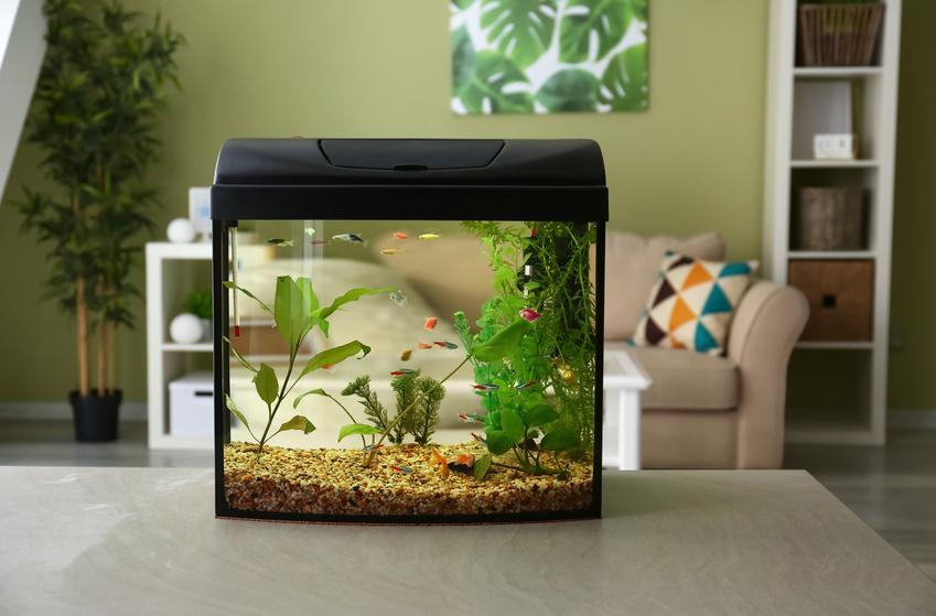 Akwarium w domu, a także polecany odmulacz do akwarium i opis działania