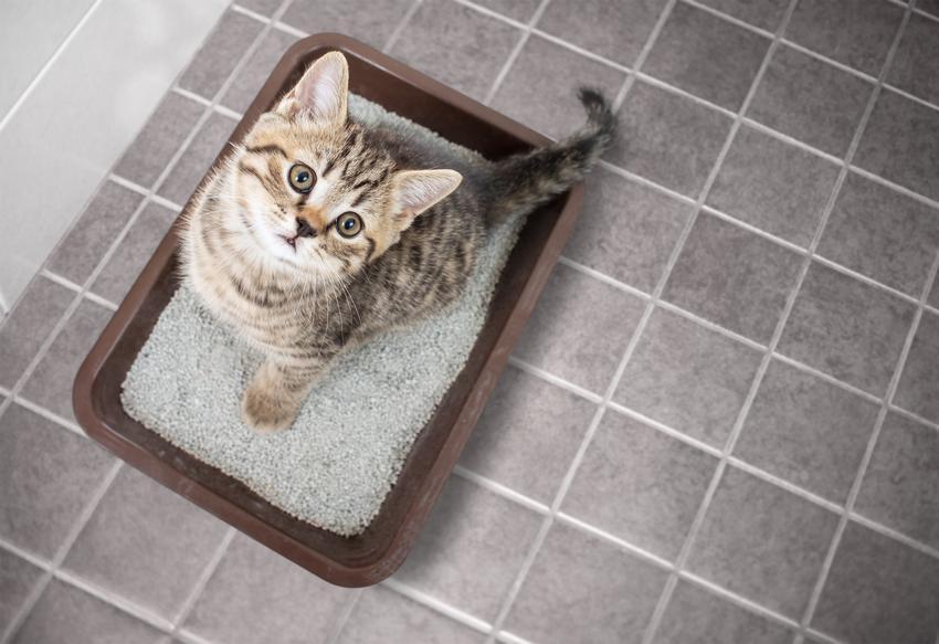 Kot siedzący w kuwecie oraz porady, jak usunąć zapach moczu kota