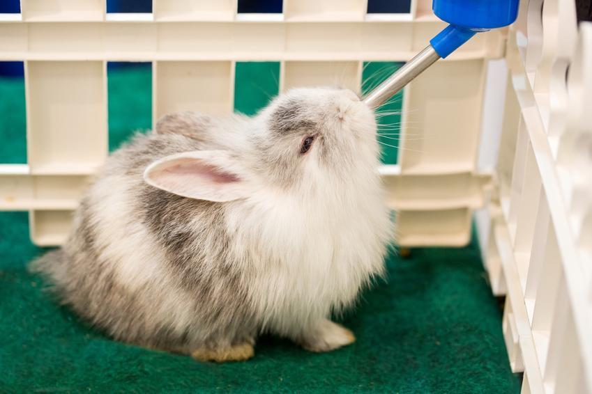 Królik w kojcu pijący z poidełka, a także polecane akcesoria dla królika