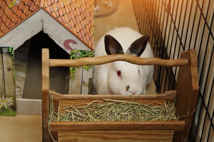 Królik w klatce przy domku i paśniku z siankiem oraz niezbędne akcesoria dla królika