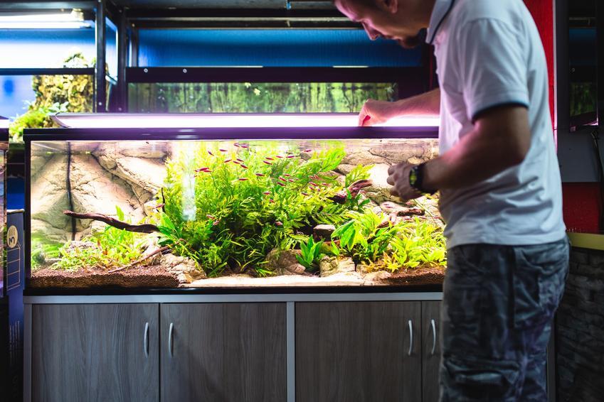 Mężczyzna przy dużym akwarium, a także pleśniawka u ryb i jej leczenie