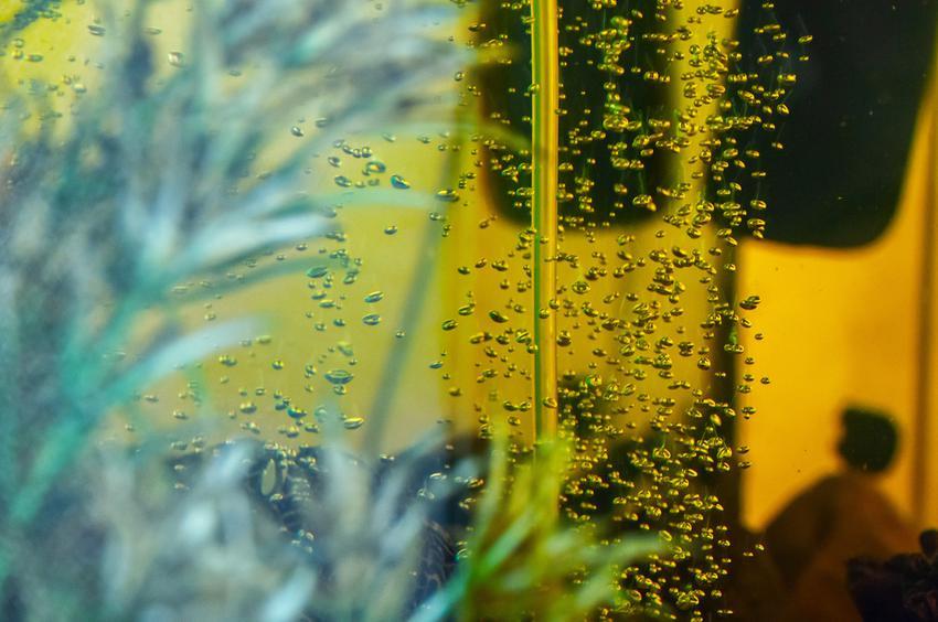 Filtrowana woda w akwarium, a także filtr odwróconej osmozy do akwarium