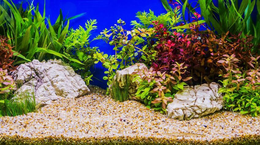 Wnętrze pięknego akwarium, a także żwirek do akwarium krok po kroku