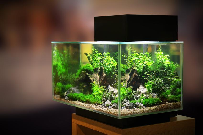 Akwarium w domu, a także żwirek do akwarium i jego rodzaje
