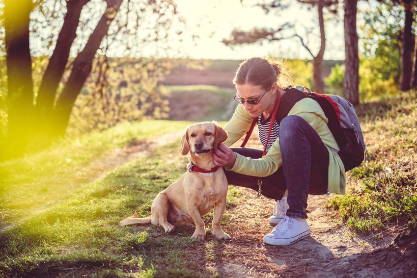 Kobieta sprawdzająca kleszcze u psa podczas spaceru, a także porady, jak usunąć kleszcza
