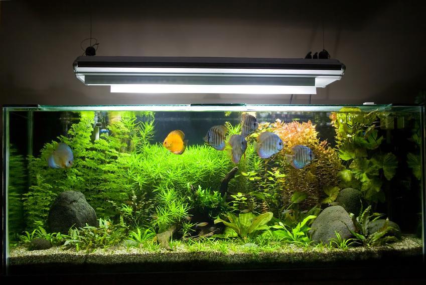 Oświetlone akwarium w domu, a także ciekawe gatunki rybek akwariowych