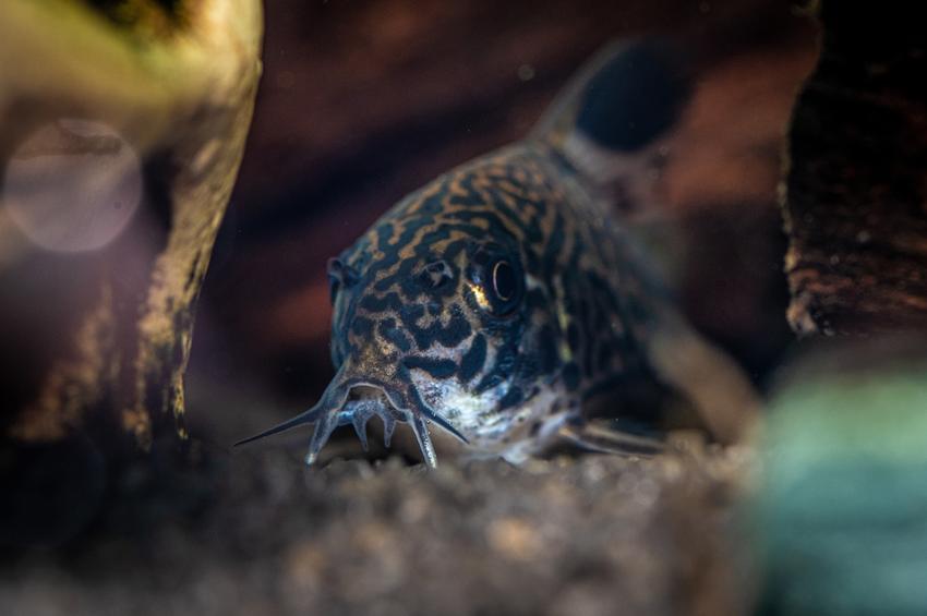 Rybka w akwarium, czyli ciekawe i polecane gatunki rybek akwariowych