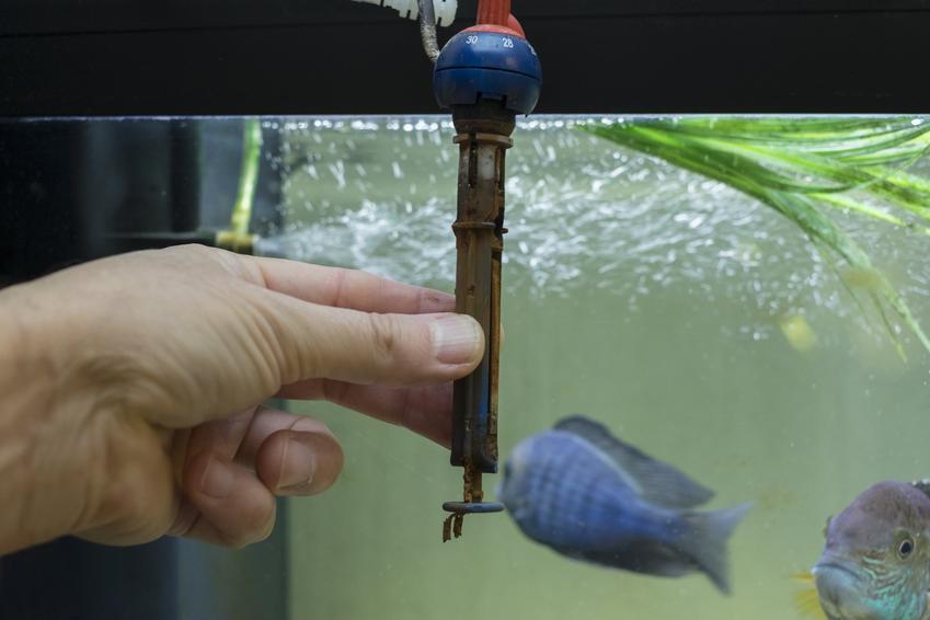 Pokrywa do akwarium, a także grzałka do akwarium z termostatem i bez