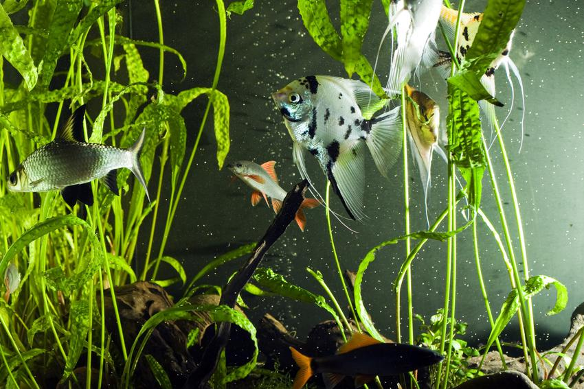 Akwarium z roślinkami, a także grzałka z termostatem i jej zasada działana