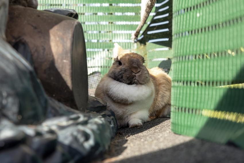 Królik w kojcu, a także porady, jaki kojec dla królika wybrać