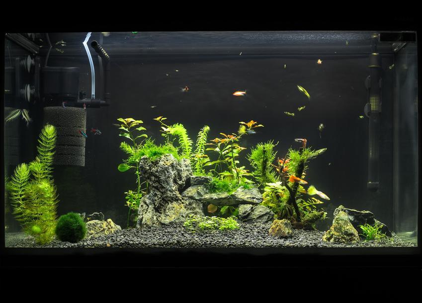 Akwarium w domu, a także wypławki, czyli niezbpieczny pasożyt oraz jak go zwalczyć